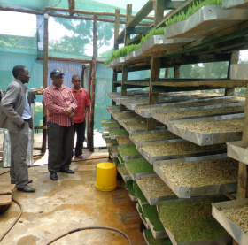 Three men are standing looking at a tall wooden shelving unit filled with large trays of seeds, some of which have sprouted into green shoots.