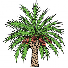 A cartoon drawing of a date palm with dates growing around the top of the trunk.