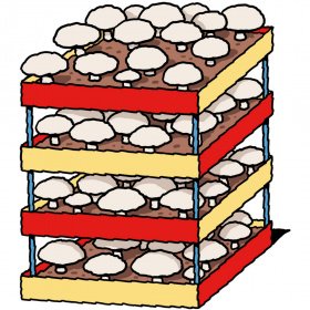 A cartoon drawing of a four shelves containing soil and lots of white mushrooms growing.