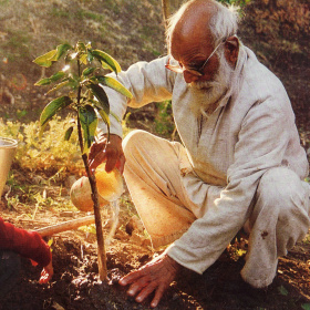 A picture of an elderly man with white hair and a white beard crouched down in front of a sapling, which he is watering from a small plastic tub.