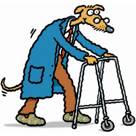A cartoon drawing of an old dog, wearing a shirt and tie, trousers, slippers and a blue dressing gown and walking using a walking frame to lean on.