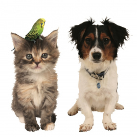 A picture of a cat and dog side by side, the cat has a small green budgie on its head.