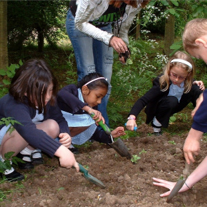 A picture of three young school girls wearing uniform and crouched down over a patch of soil, digging with trowels.
