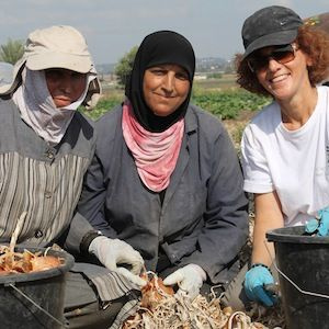 A picture of three women in a crop field looking at the camera and smiling, with onions in their hands and buckets of onions in front of them. Two women have their hair covered and one is just wearing a baseball hat.