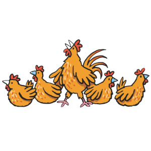 A cartoon drawing of 5 chickens in a row, the middle chicken is standing up and crowing, the other 4 are sat down as if nesting.