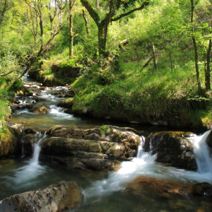 A picture of a fast running stream in a lush green environment.