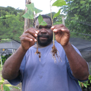 A man is looking directly at the camera and holding up two cocoa saplings, one in each hand.