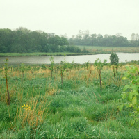 A picture of a field with saplings growing and behind it a wide river, with more fields and bigger trees in the background on the other side.
