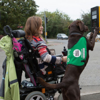 A woman in a wheelchair is at a road crossing and her guide dog is next to her with its front paws on the pedestrian crossing button.