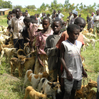 A line of children and young people are stood in a field, each one holding a string tied to one or two dogs.